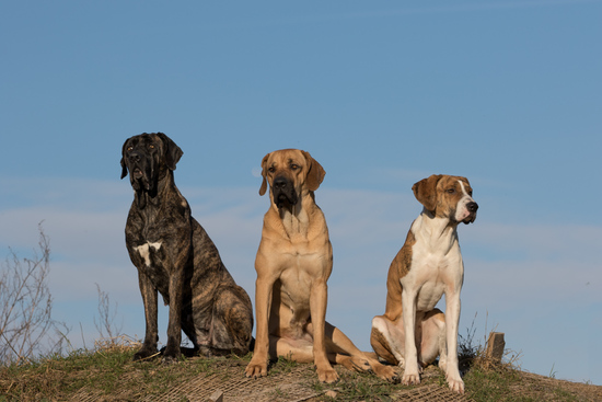 Three dogs on the hill sitting